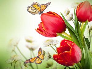 Χαρτοπετσέτες Decoupage 33 x 33 butterfly